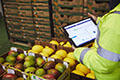 warehouse worker using a tablet device to check fruit inventory